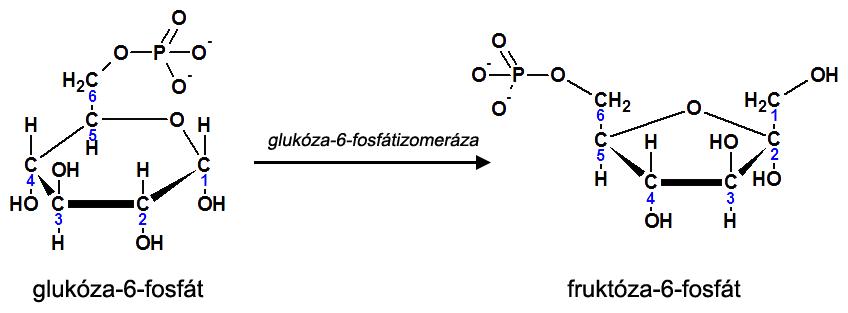 2. krok glykolýzy
