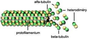 Štruktúra mikrotubulu