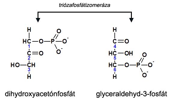 5. krok glykolýzy