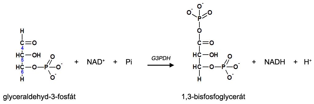 6. krok glykolýzy