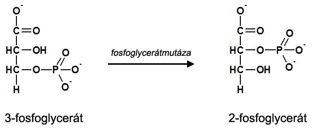 8. krok glykolýzy