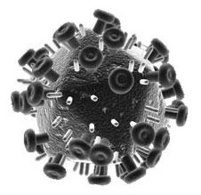 Schéma viriónu vírusu HIV