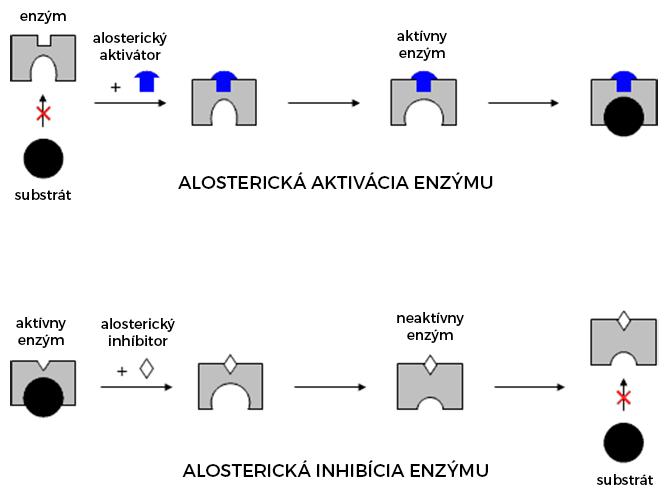 Alostetická aktivácia a inhibácia enzýmu