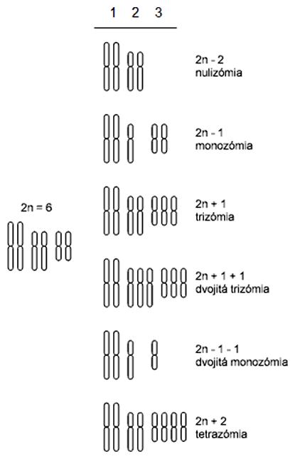 Príklady aneuploidie