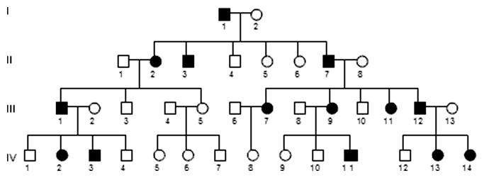Autozómovo dominantná dedičnosť (AD)