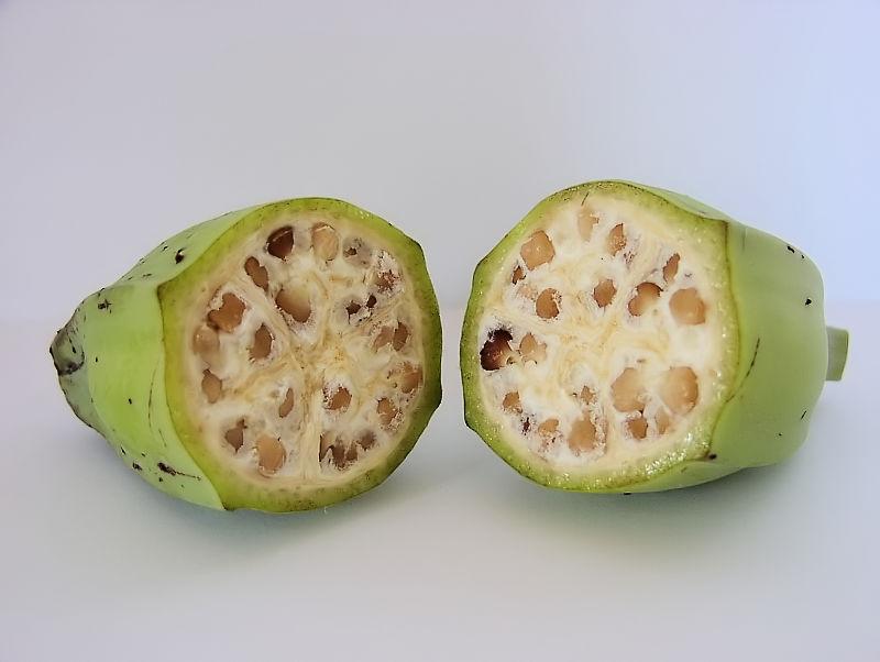 Plod divého banánu