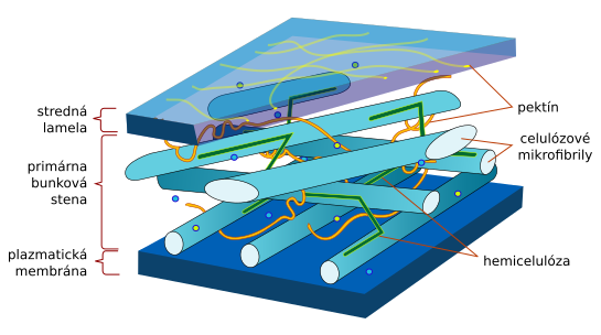 Štruktúra bunkovej steny rastlinnej bunky