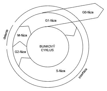 Schéma bunkového cyklu eukaryot