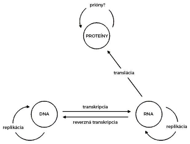 Centrálna dogma molekulárnej biológie