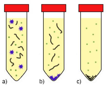 Diferenciálna centrifugácia s využitím rôznej centrifugačnej sily