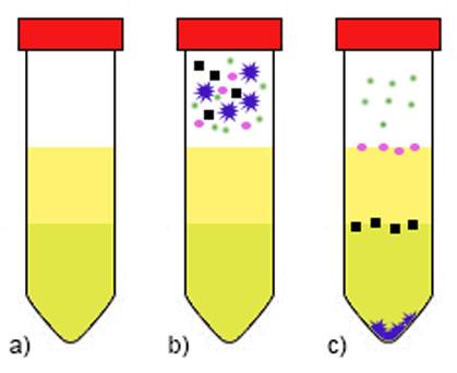 Diferenciálna centrifugácia s využitím hustotného gradientu