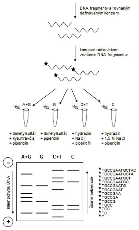 Chemická metóda sekvenovania DNA