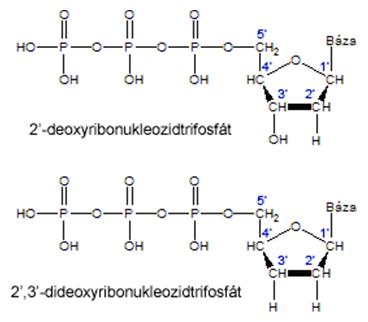 Chemická štruktúra štandardného a modifikovaného nukleotidu