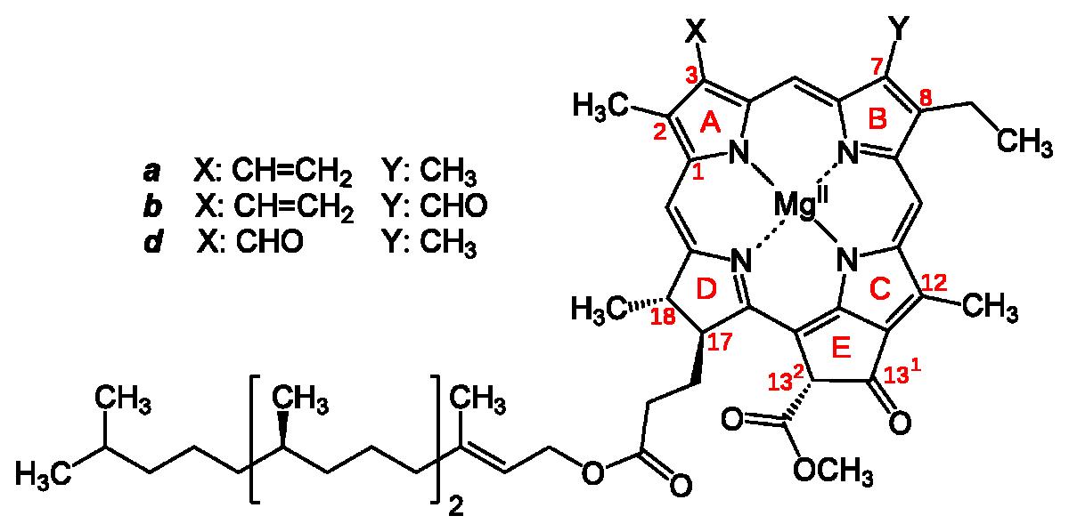 Štruktúra chlorofylu a, b, d