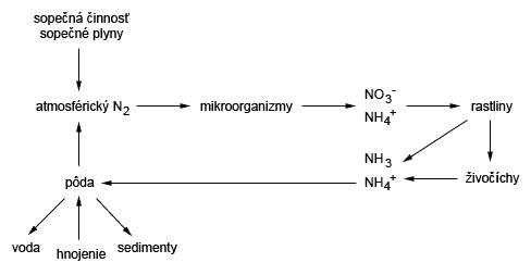 Cyklus dusíka