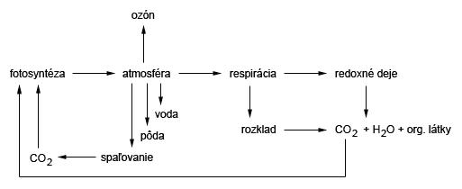 Cyklus kyslíka