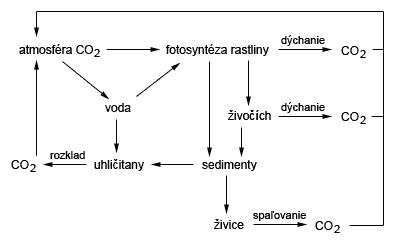 Cyklus uhlíka