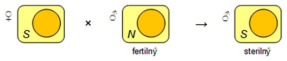 Schéma kríženia pri cytoplazmatickej samčej sterilite