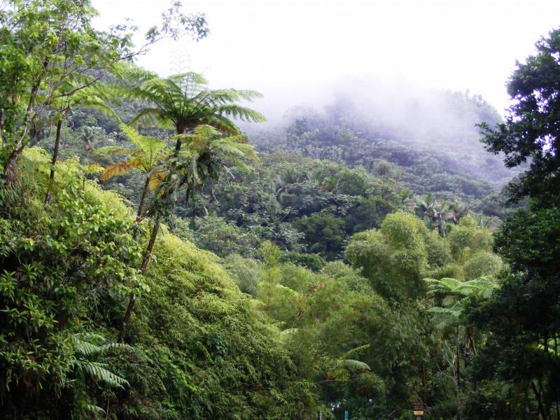 Dažďový les