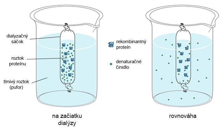 Schéma priebehu dialýzy rekombinantného proteínu