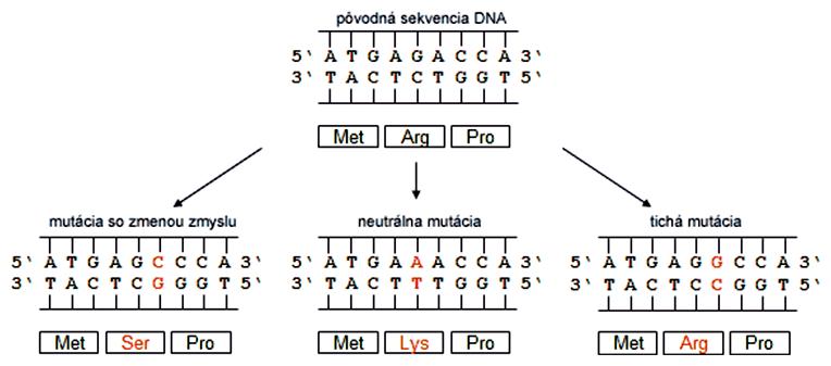 Efekt mutácií na sekvenciu aminokyselín