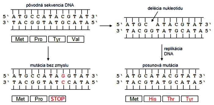 Efekt mutácií na zmenu čítacieho rámca