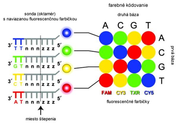 Primárna štruktúra sond a farebný kód ColorSpace systému SOLiD
