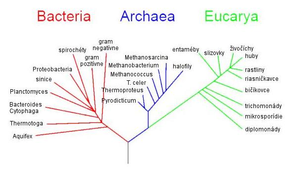 Fylogenetický strom (Woese, 1990)