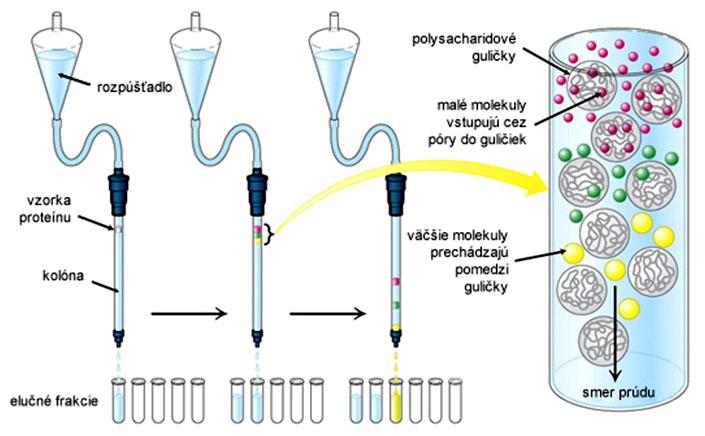 Princíp a priebeh gélovej filtrácie