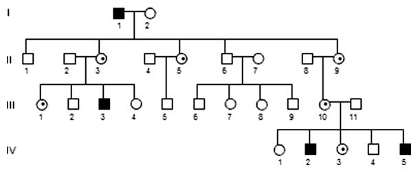 Gonozómovo recesívna dedičnosť (XR)