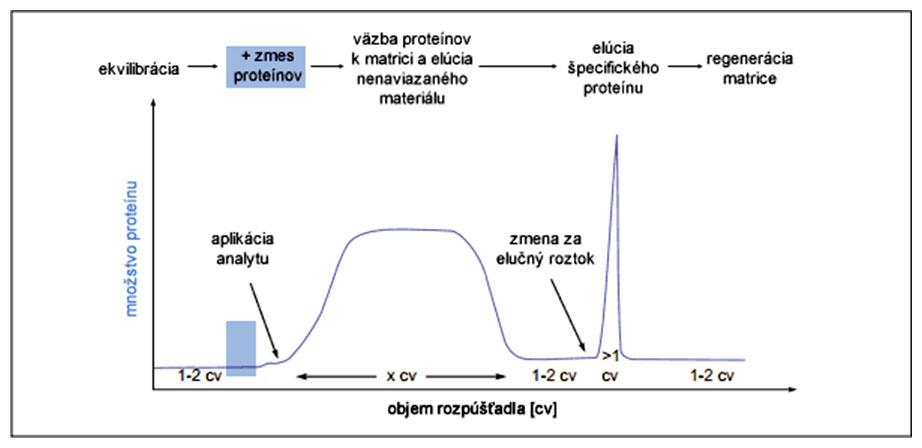 Grafický abstrakt separácie proteínov metódou afinitnej chromatografie
