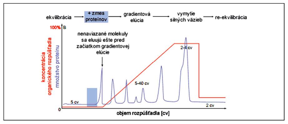 Grafický abstrakt separácie proteínov metódou chromatografie v reverznej fáze