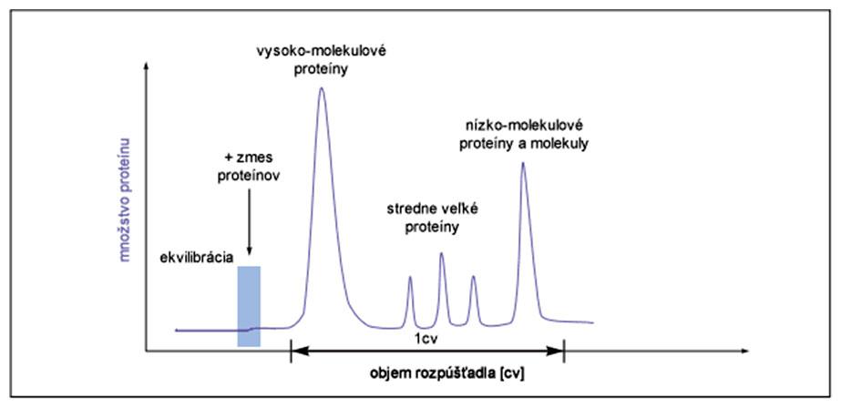 Grafický abstrakt separácie proteínov metódou gélovej filtrácie