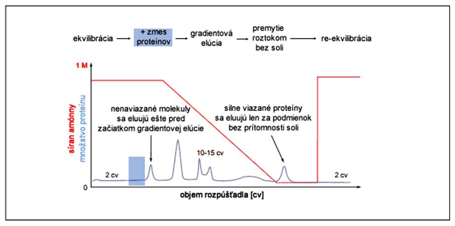 Grafický abstrakt separácie proteínov metódou hydrofóbnej chromatografie