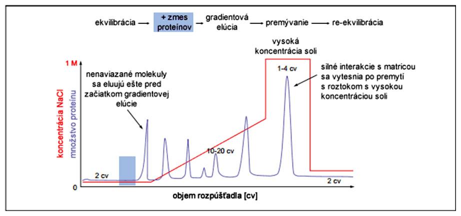 Grafický abstrakt separácie proteínov metódou ionomeničovej chromatografie