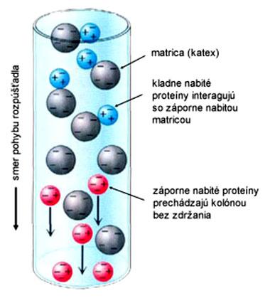 Princíp separácie pri ionomeničovej chromatografii