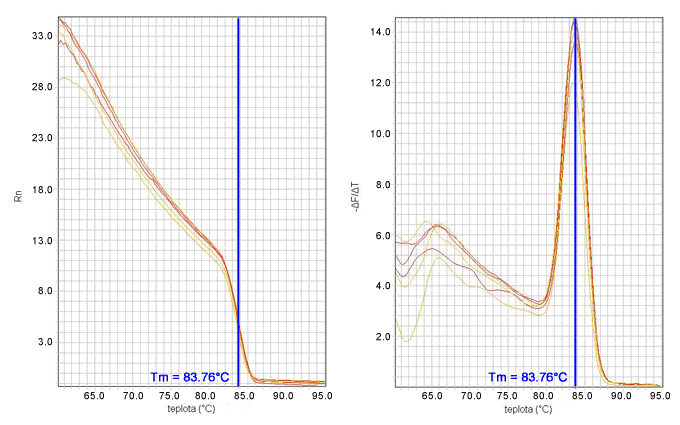 Krivka topenia - závislosť teploty topenia PCR produktu od normalizovanej fluorescencie resp. od zmeny fluorescencie voči teplote