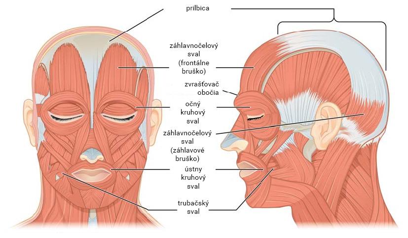 Mimické svaly