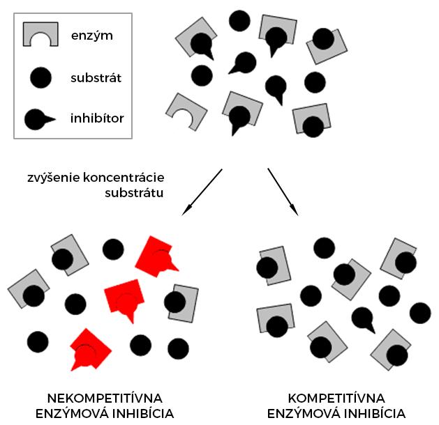 Nekompetitívna a kompetitívna inhibícia enzýmu