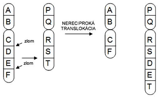 Schéma nereciprokej translokácie