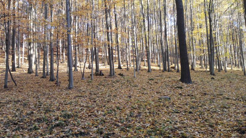 Opadavý širokolistý les mierneho pásma (Slovensko)