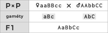 Schéma kríženia ♀ aaBBcc × ♂ AAbbCC