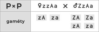 Schéma kríženia ♀ zzAa × ♂ ZzAa