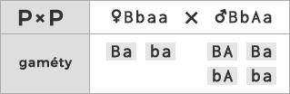 Schéma kríženia ♀ Bbaa × ♂ BbAa