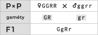 Schéma kríženia ♀ GGRR × ♂ ggrr