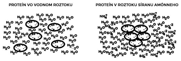 Proteín vo vodnom roztoku a v roztoku síranu amónneho