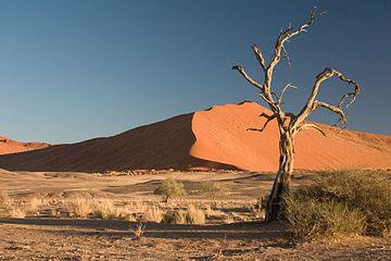 Púšť (Namib)