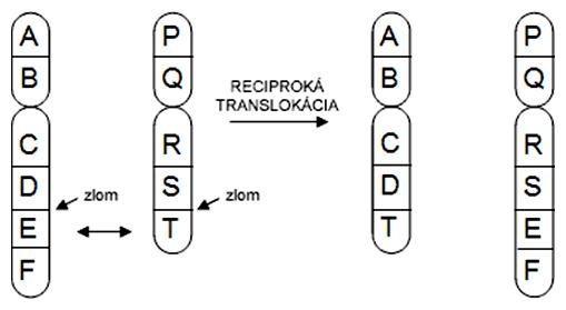 Schéma reciprokej translokácie