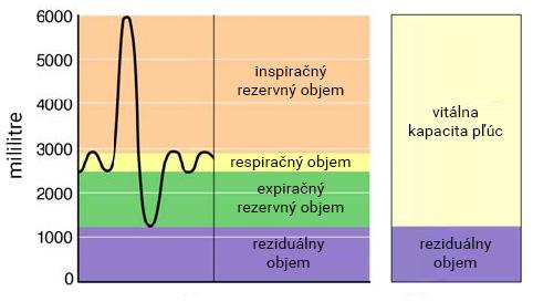 Respiračné objemy a kapacity