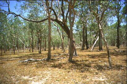 Savanový les